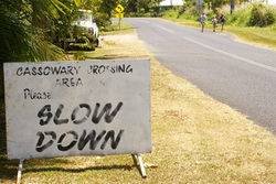 Locals ask traffic to slow down