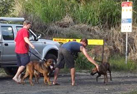 Hunting dogs off leash in cassowary country