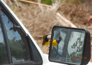 PMale sunbirds are territorial